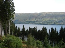 South Laggan Forest